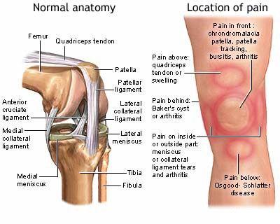 Pin On Medical Illustration