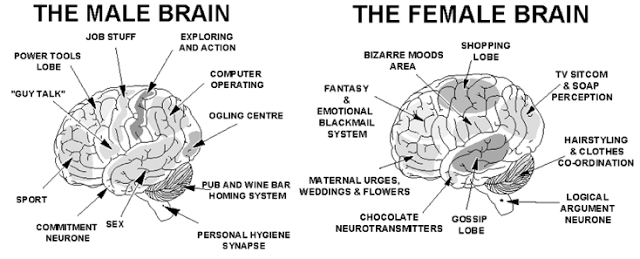 pics photos differences between men and women s brains