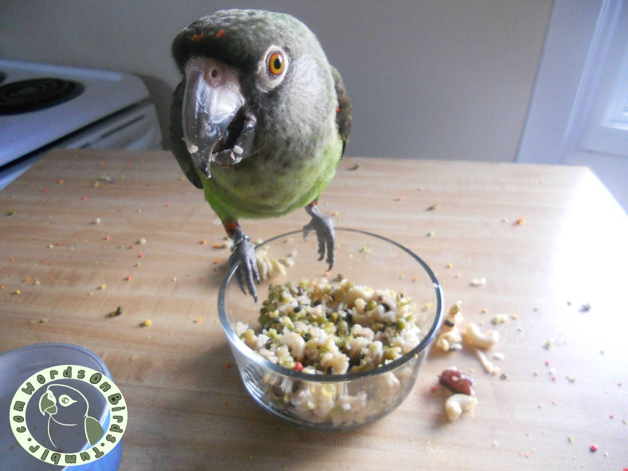 [Image Dax the Jardines parrot sitting on a clear bowl