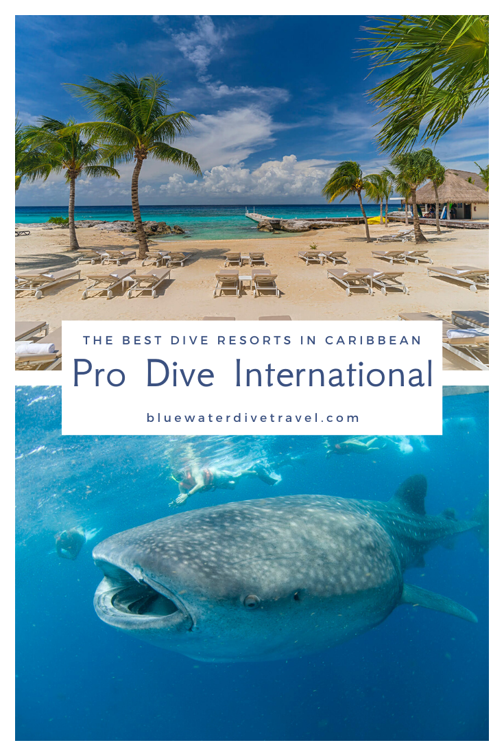 Pro Dive International In 2020 Dive Resort Diving Cozumel Mexico