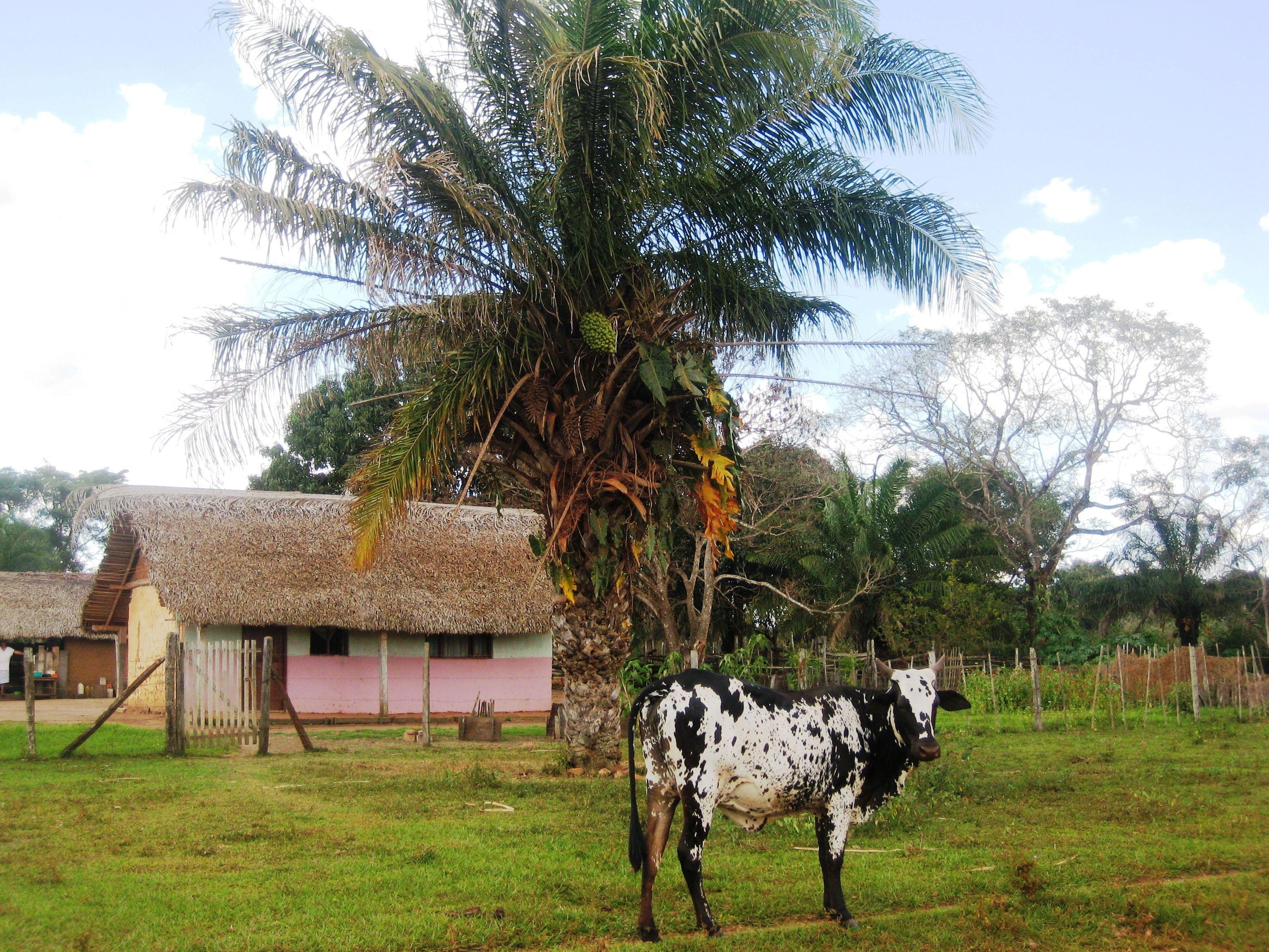 Casa de la palmera motac camino entre concepci n y san for Casa la mansion santa cruz bolivia