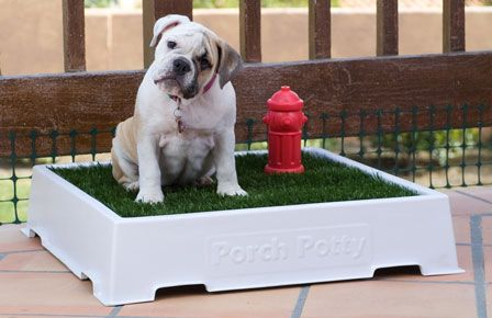 Porch Potty Just Bought This For My French Bull Dog Who Doesn T