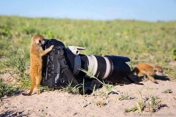 Dat iemand een professionele camera heeft betekent nog niet dat hij ook kan fotograferen...