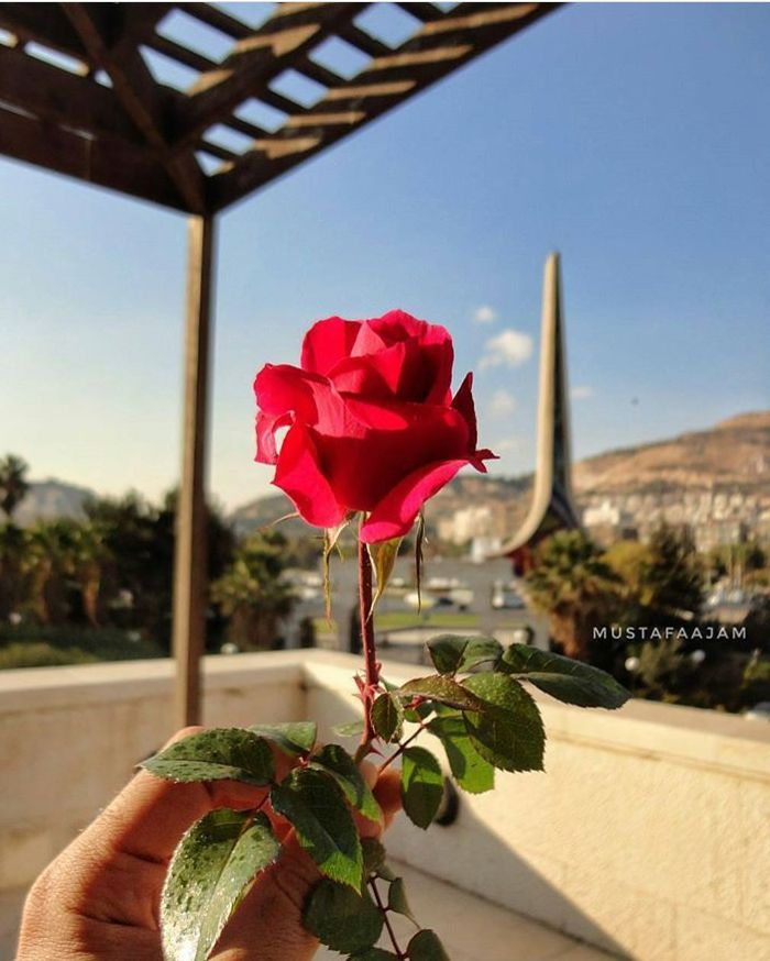 الشام Syria Flowers Damascus