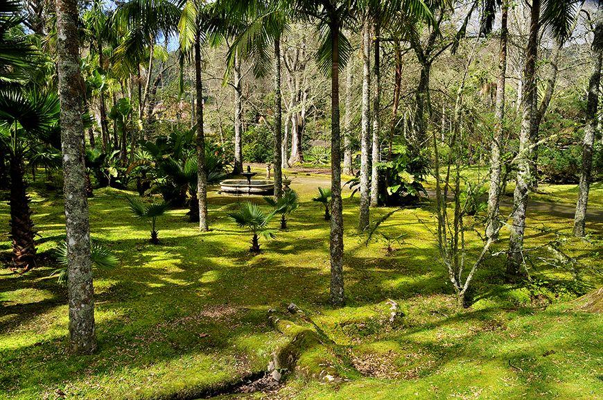 SIARAM :: Parque Terra Nostra, São Miguel Island, Azores, Portugal