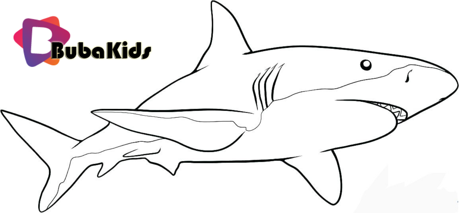 Great White Sharks are king of the Ocean. Sharks coloring pages. baby shark,  cartoon, Shark, Shar… | Shark drawing, Great white shark drawing, Shark  coloring pages