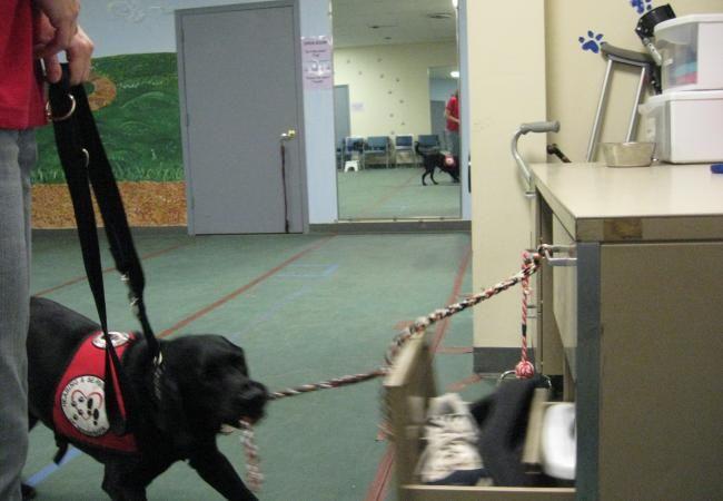 Service Dog At Work Service Assistance Dogs Service Dog