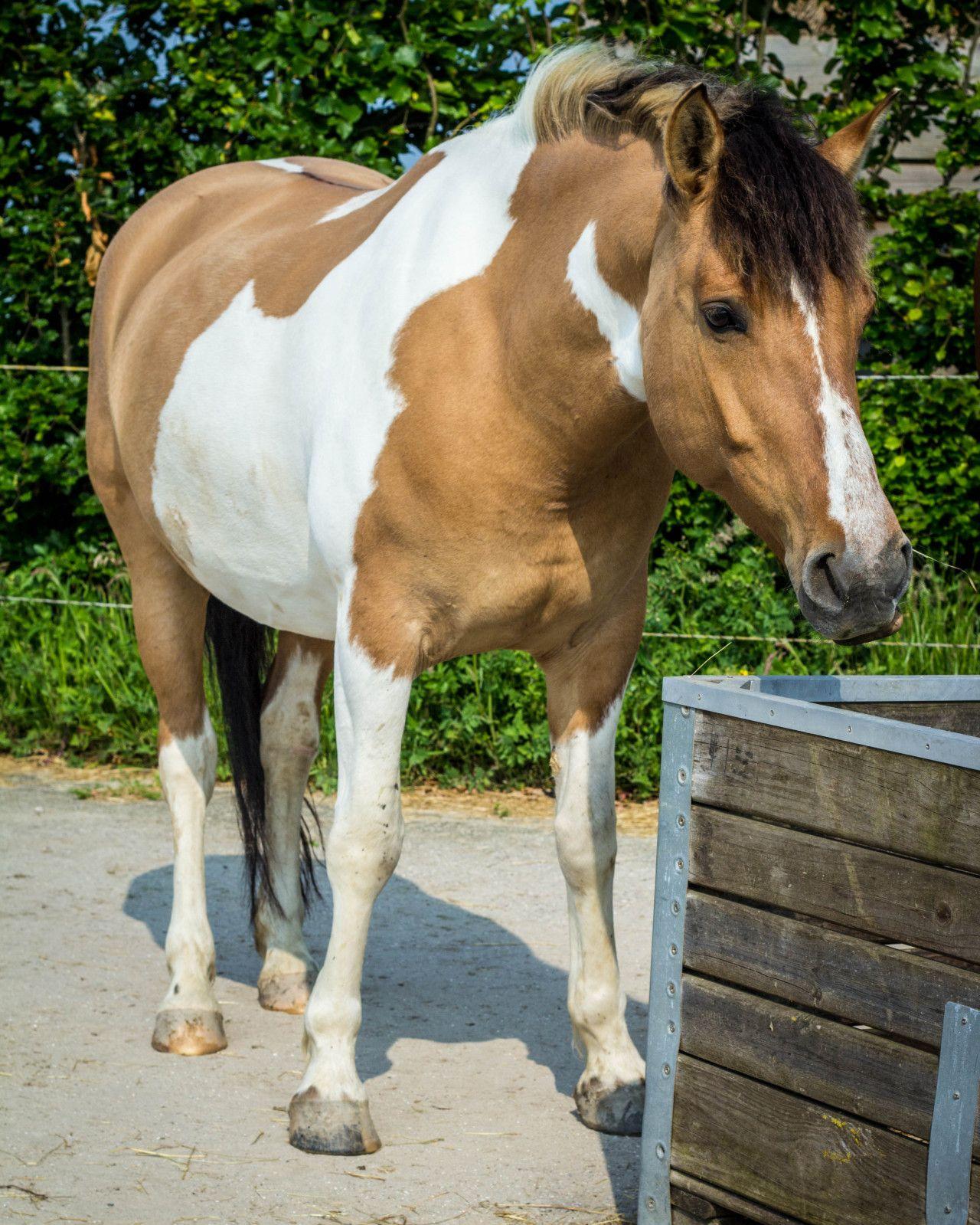 Dun Horse, Beautiful Horse Pictures, Horse