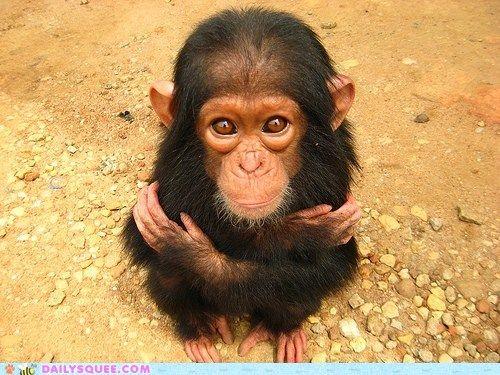 Baby chimp.