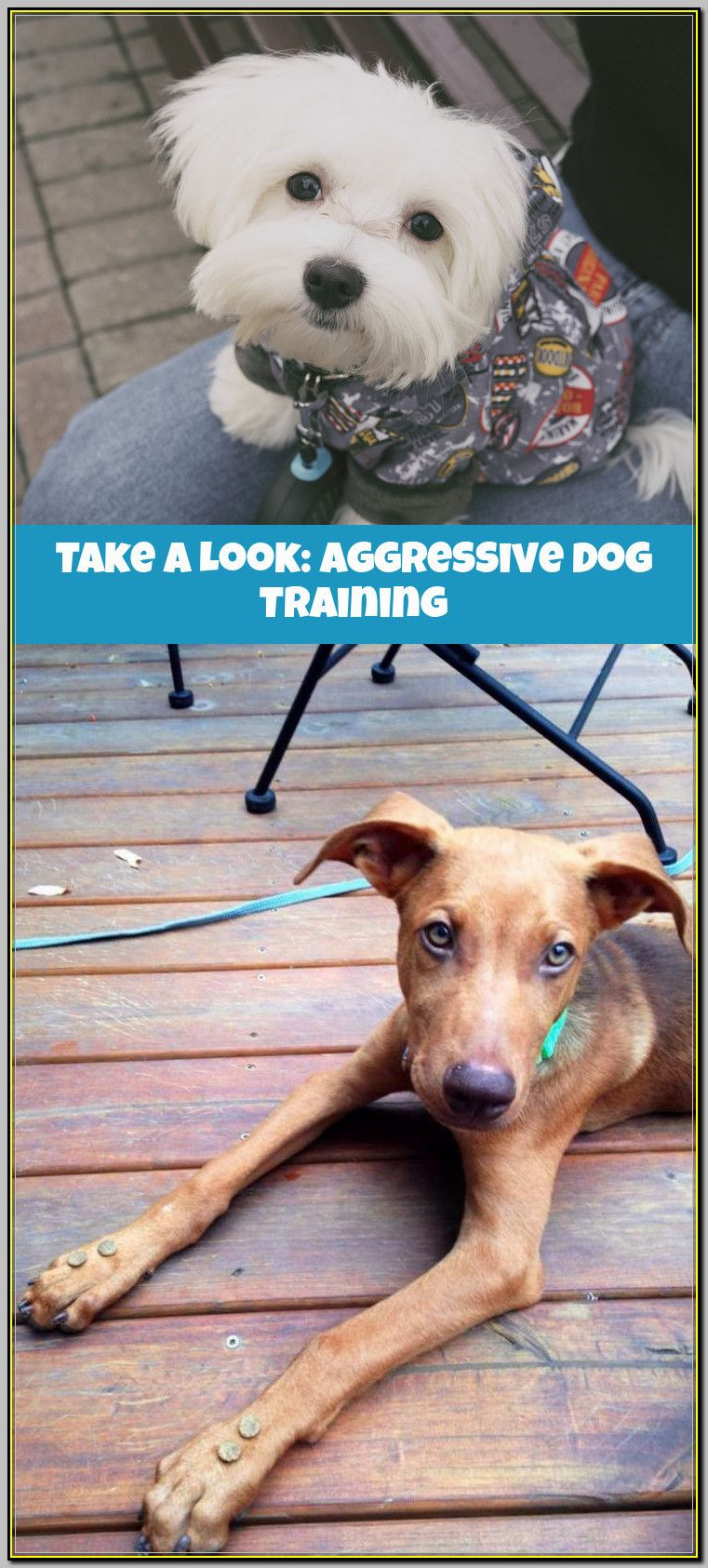 New to aggressive dog training consider this advice in