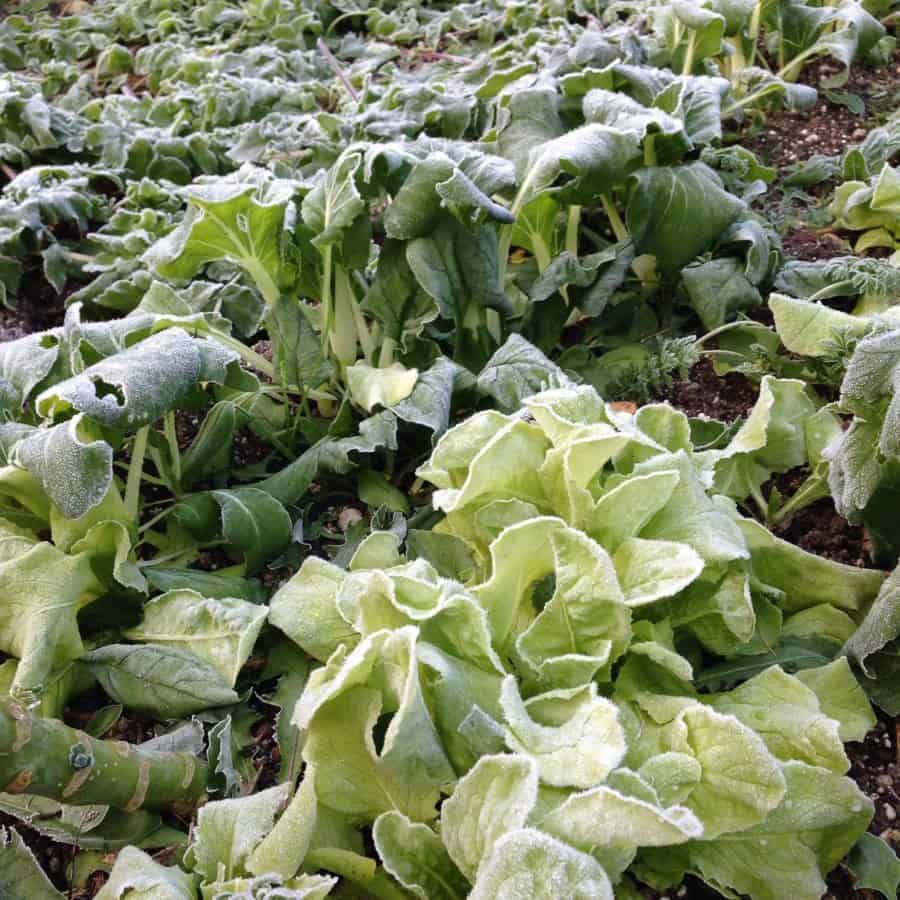 Small Year Round Veg Patch: How To Grow Food Year-Round