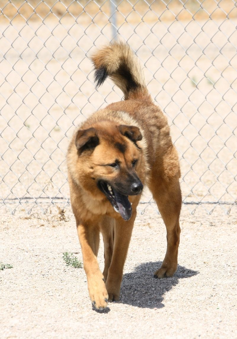 Adopt Bozeman On Dogs Of The World Animal Rescue Site Animal