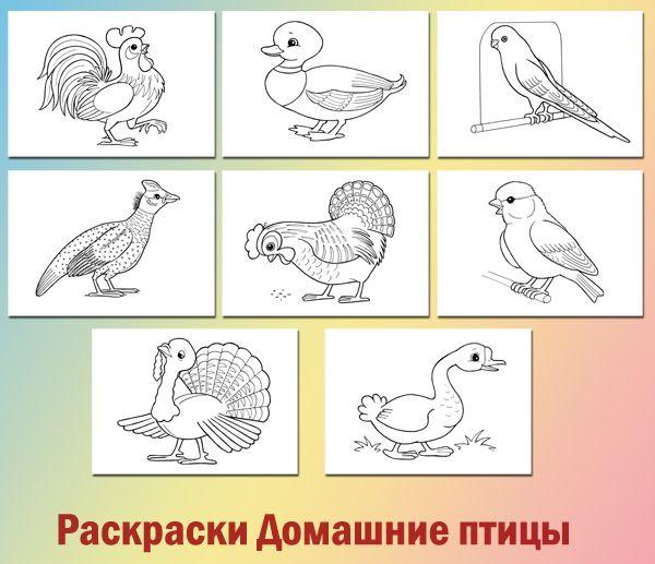 лексическая тема домашние птицы раскраски для детей
