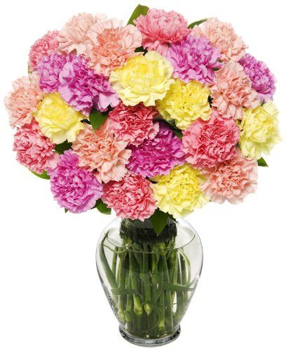 25 Stem Pastel Carnation Bunch Anniversary Flowers Fresh Flower Bouquets Carnations