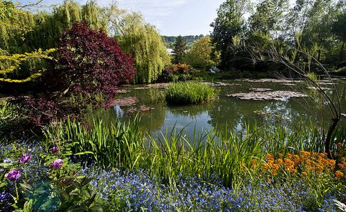 Monet's Garden in Giverny, France. The Pond (IV) by Rosarian49.