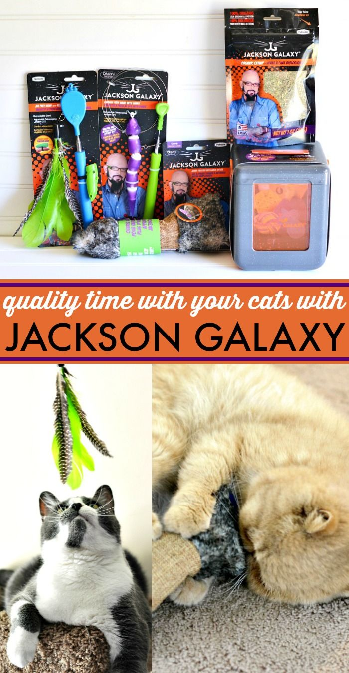 Spend Quality Time With Your Cats With Jackson Galaxy Cat Toys From Petmate Jacksongalaxycatplay Ad Therapy Cat Cats Jackson Galaxy