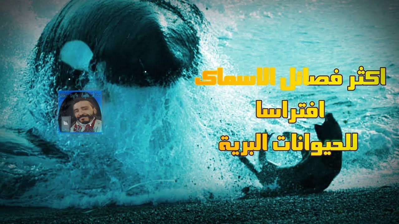 اكثر فصائل الاسماك افتراسا للحيوانات البرية ستندهش بطريقة صيدها Movie Posters Poster Movies