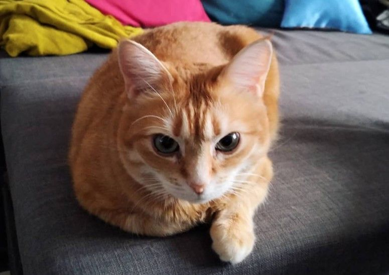 80 Cute Orange Cat Names Orangecat Tabby Cat Names Orange Tabby Cats Tabby Cat