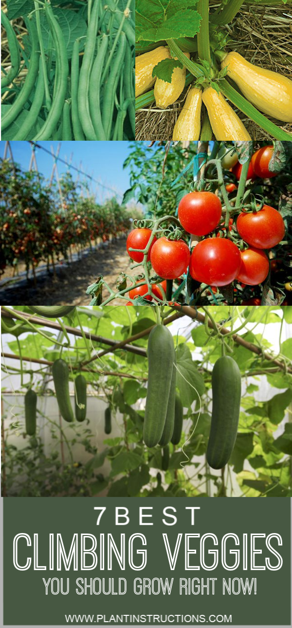 Best Climbing Vegetables You Should Be Growing Planting 640 x 480