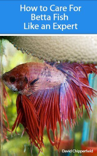 Santas Tools and Toys Workshop: eBooks: How to Care for Betta Fish Like an Expert (Aquarium and Turtle Mastery)