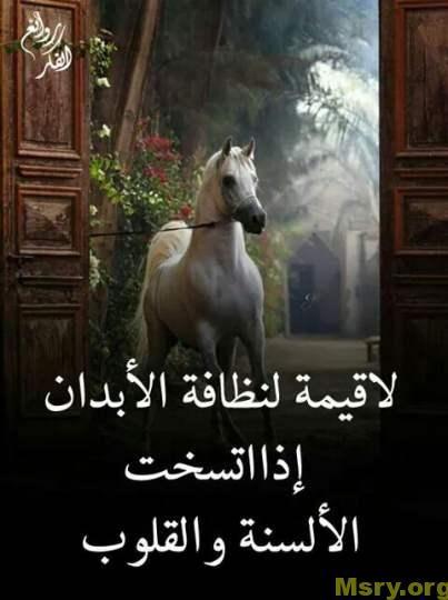 حكم وامثال لأشهر الأدباء والفلاسفة وامثال شعبية مصرية موقع مصري Wisdom Quotes Life Funny Arabic Quotes Cartoon Quotes