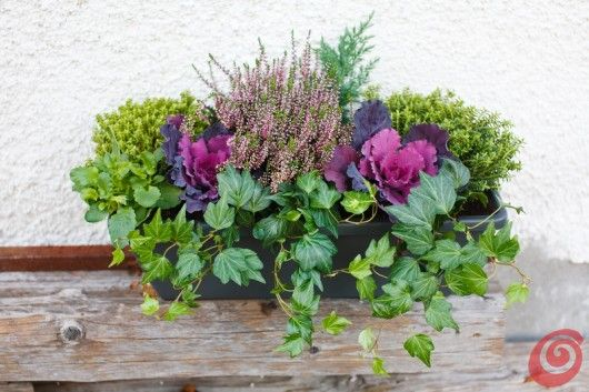 composizioni floreali per le fioriere invernali