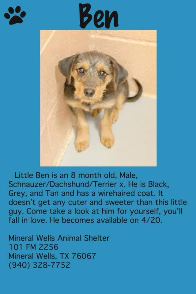 Please Adopt Mineral Wells Animal Shelter In Texas Animal Shelter Mineral Wells Animals