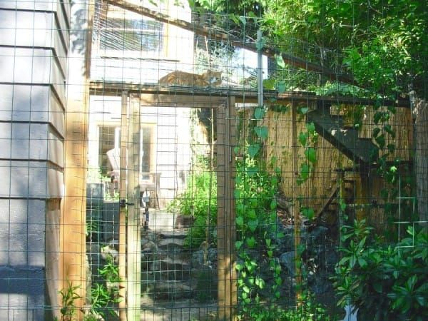 homeowner builds a weird patio out back, then the cat climbs in | cat - Cat Patio Ideas