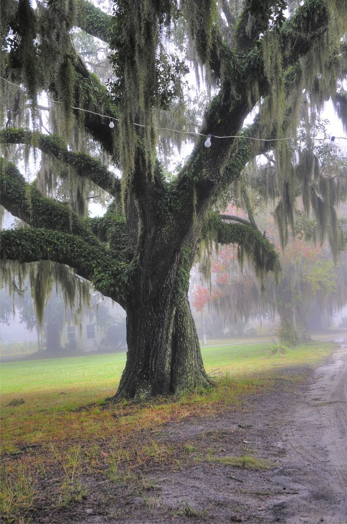 Beaufort Sc Live Oak Thanks To The Landscape Of Home My Childhood Memories Are Filled With Magic 3