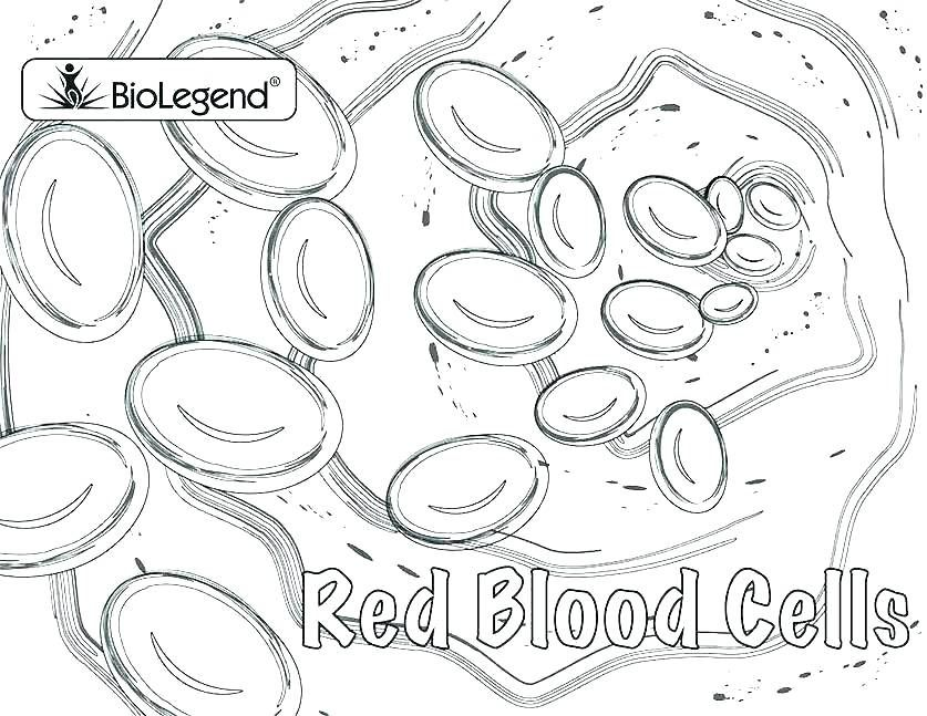 Grab your Fresh Coloring Pages Blood Answer Key For You
