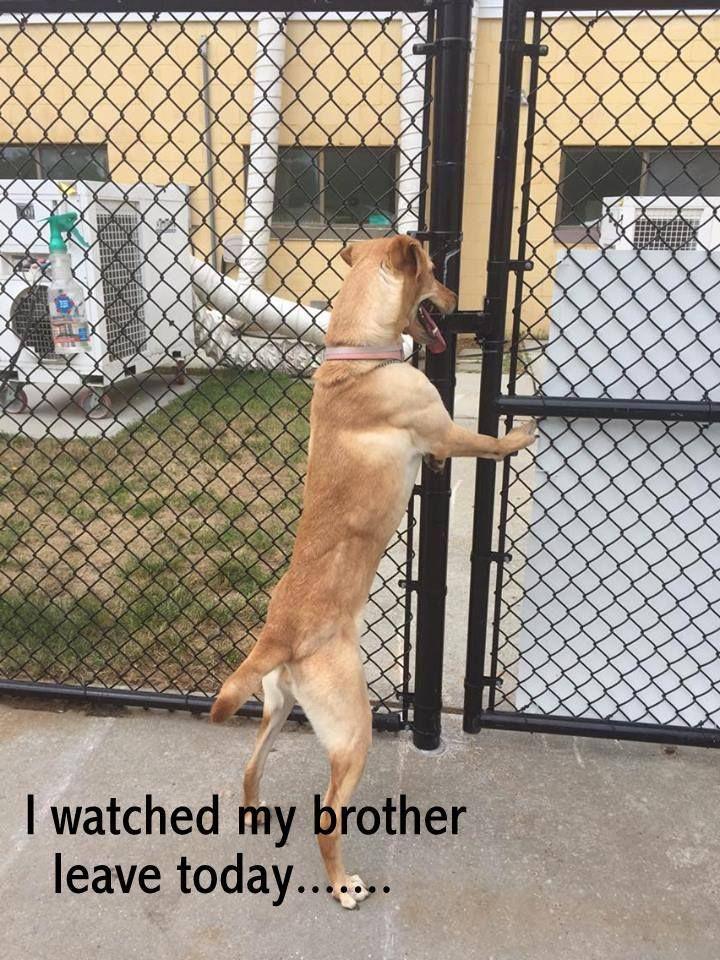 Small Dog Adoptions Near Me Infospace Web Search Dog Adoption Rescue Dogs For Adoption Small Dog Adoption