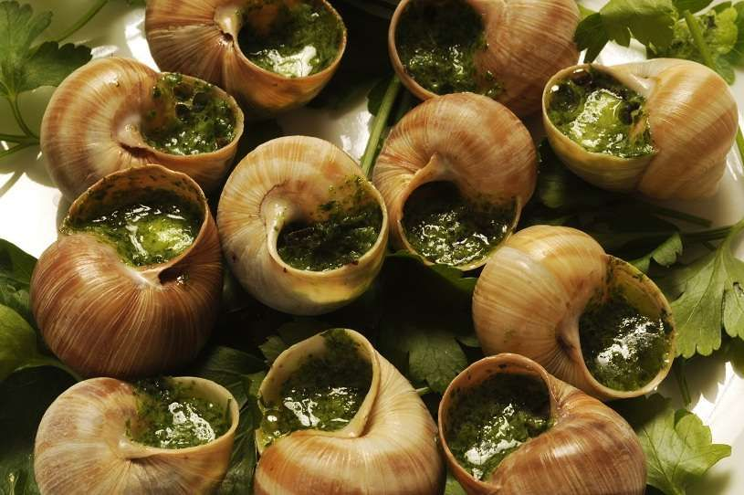 french food snails french cuisine pinterest french