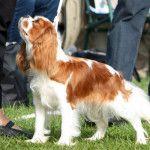 https://www.hundenyheder.dk/hvad-koster-det-at-have-hund/ - fin artikel. Ca. 1.000 kr. om måneden – i gennemsnit  Ca. 1.000 kr. om måneden i gennemsnit er ifølge flere 'garvede' hundeejere et godt udgangspunkt, når man som ny hundeejer gerne vil have en idé om, hvad det koster at have hund, men det er selvfølgelig meget generaliserende, bl.a. fordi der er stor forskel på, hvilken mængde foder og i og med at der er tale om et levende væsen, kan der (desværre) komme uforudsete dyrlægeregninger