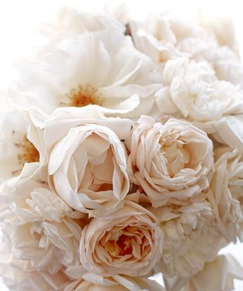 Wedding Ideas: flowering-white-yellow-peonies