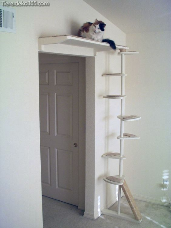 Spektakulär Baum-zu-Katze-Ideen, die Sie revidieren sollen  #ideen #katze #revidieren #sollen