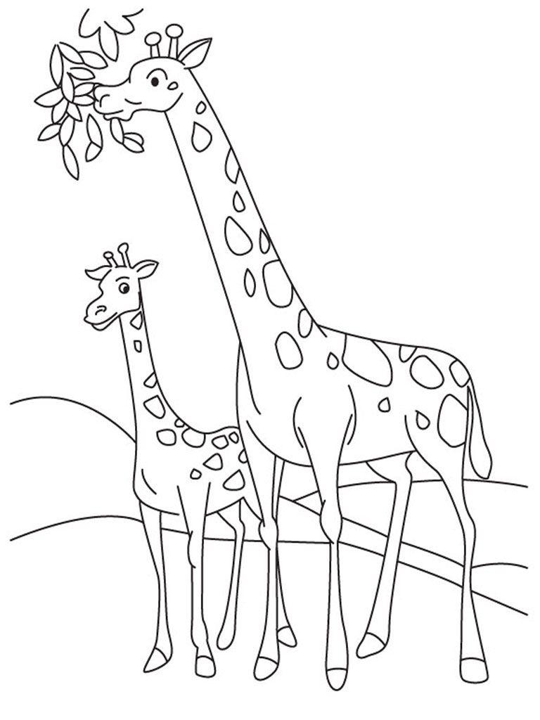 giraffe coloring pages | Giraffe Coloring Pages Realistic | Giraffes ...