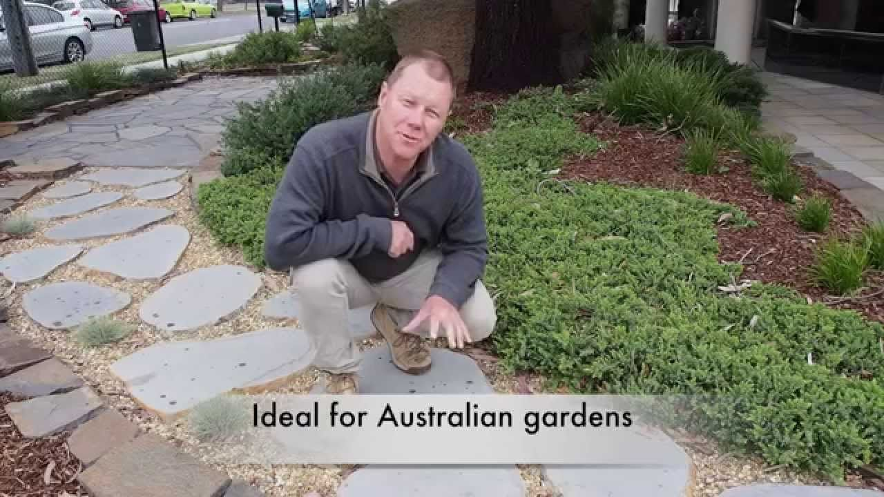 Basalt Bluestone Round Stepping Stone Display At Edwards Slate Round Stepping Stones Australian Garden Garden Stepping Stones