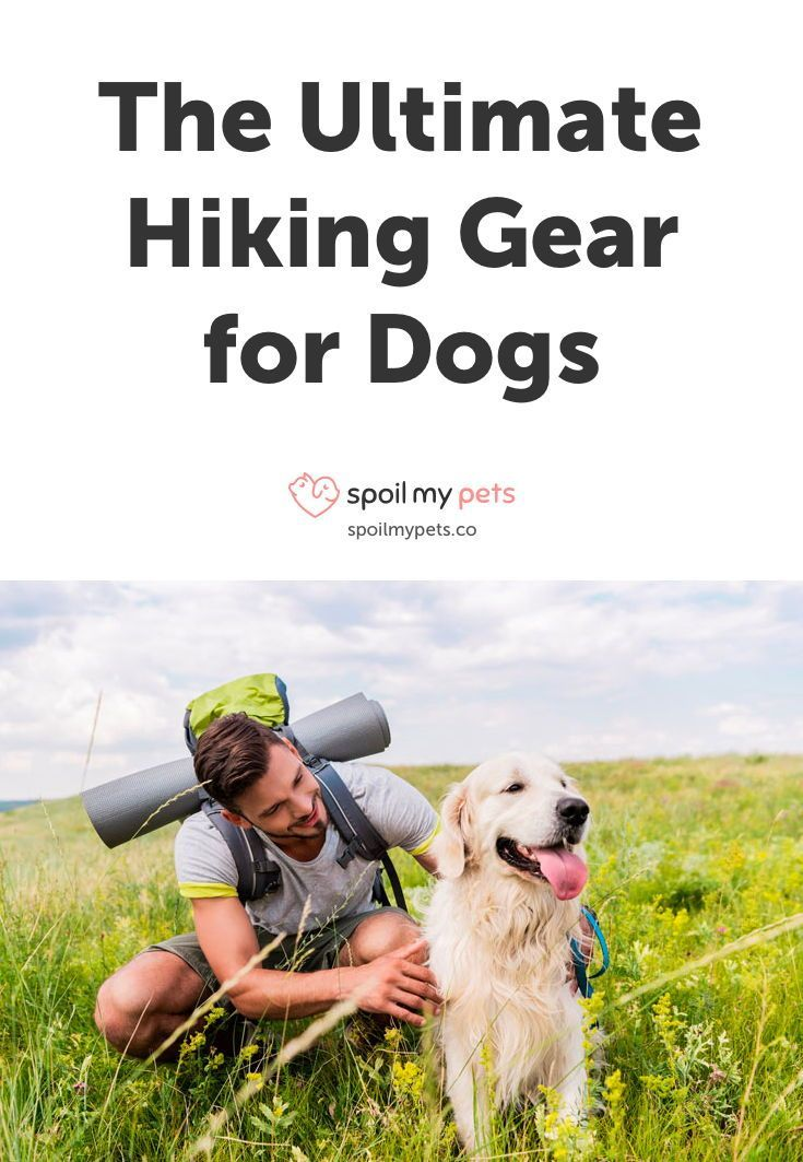 Photo of The Ultimate Hiking Gear for Dogs