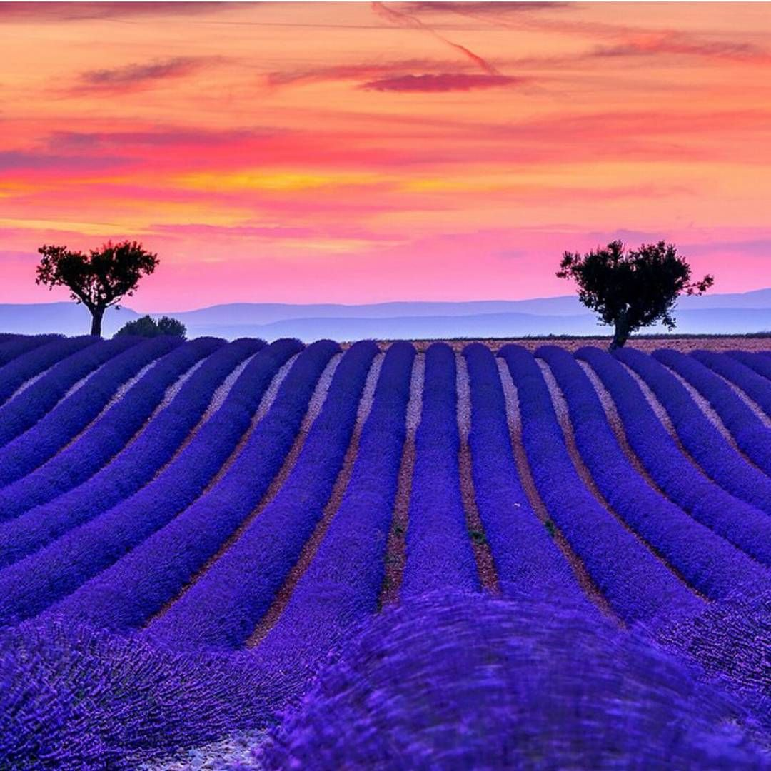 "@followmefaraway on Instagram: ""Too gorgeous for words...Valensole Provence, France. Photo by @michelerossettiphotography"""
