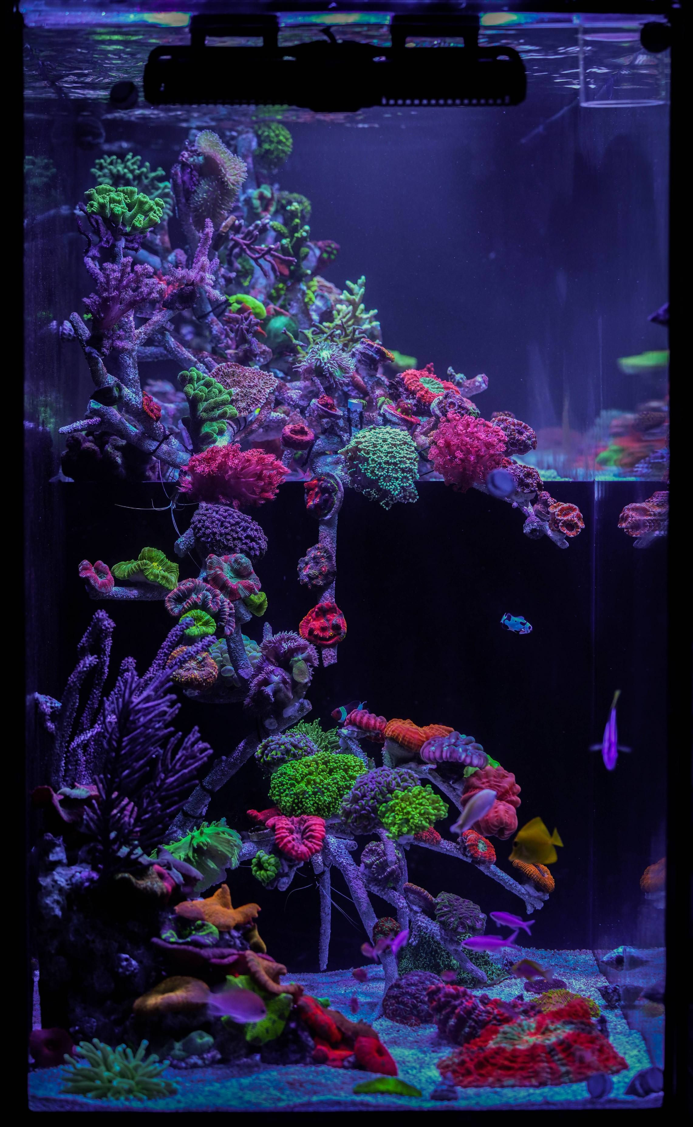 What Do You Think Are The Most Anticipated Reef Keeping Innovations Coming In 2019 Https Www Reef2reef Com Threads W Meerwasser Aquarium Meerwasser Aquarium