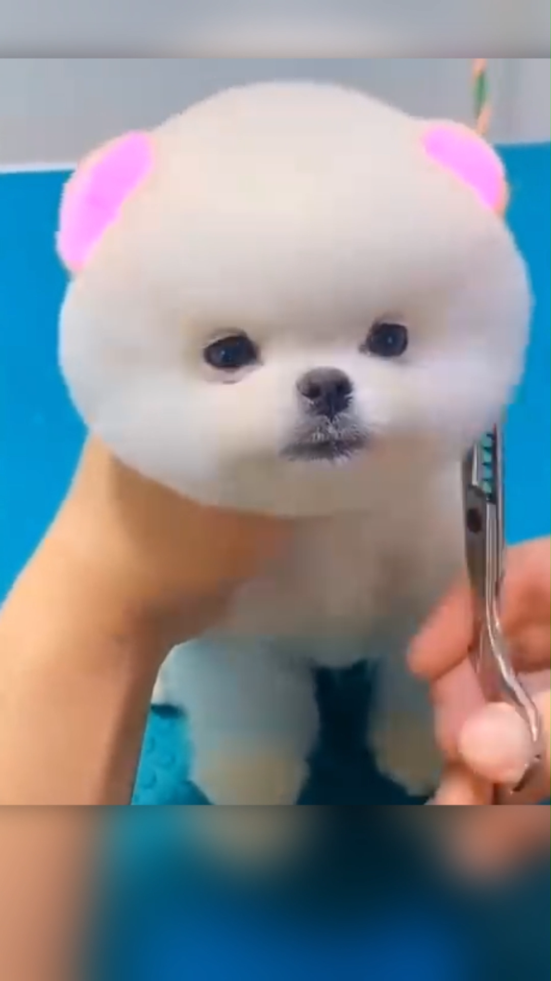 Oddly Satisfying Cute Puppy Grooming #1