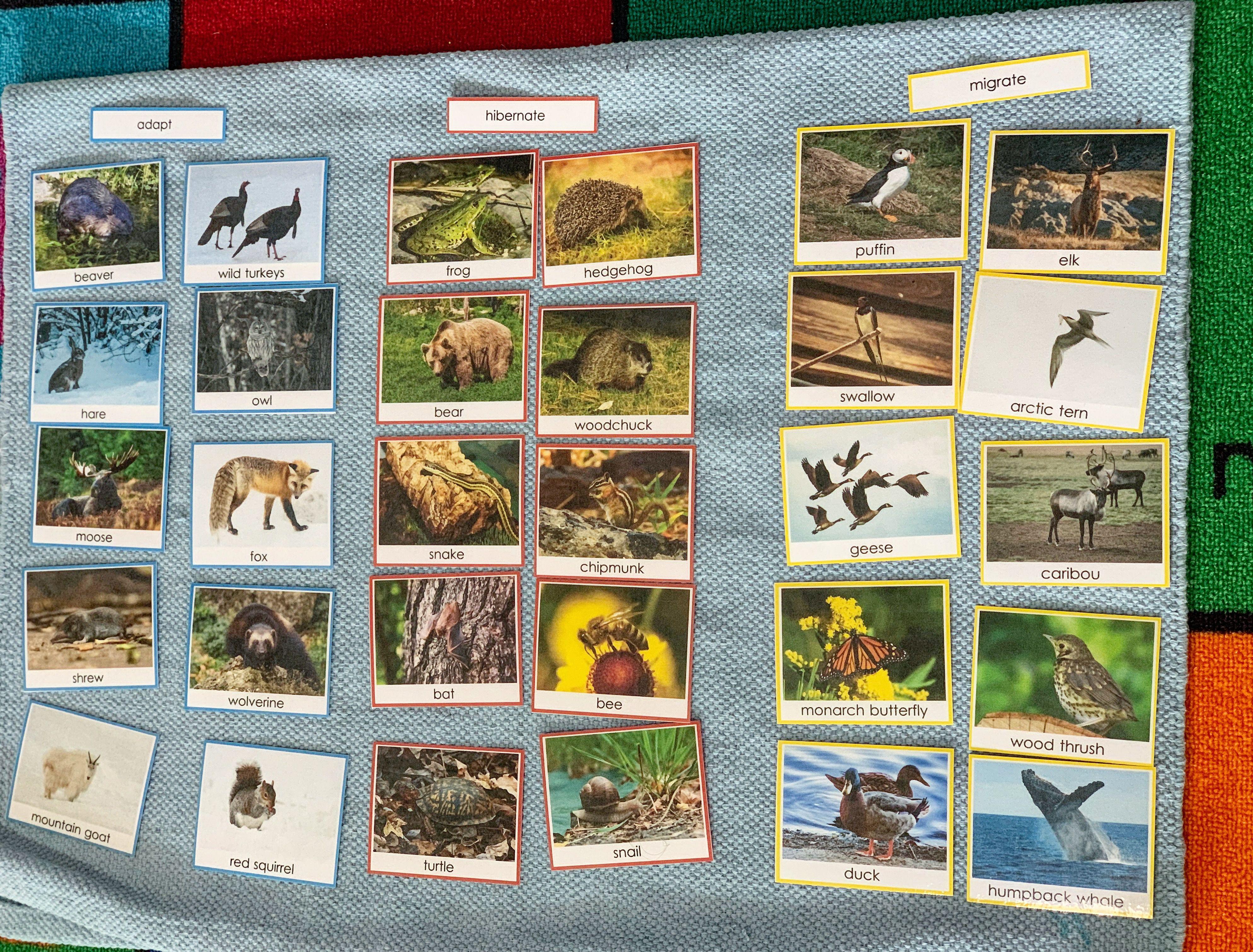Kids Enjoyed Studying About The Animals Birds Who Adapt