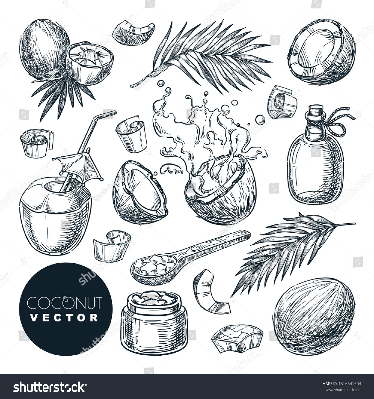 Coconut Sketch Vector Illustration Broken Coco Nuts With Milk Splashes Butter Oil And Palm Leaves Ha Illustration Vector Illustration Drawing Illustrations