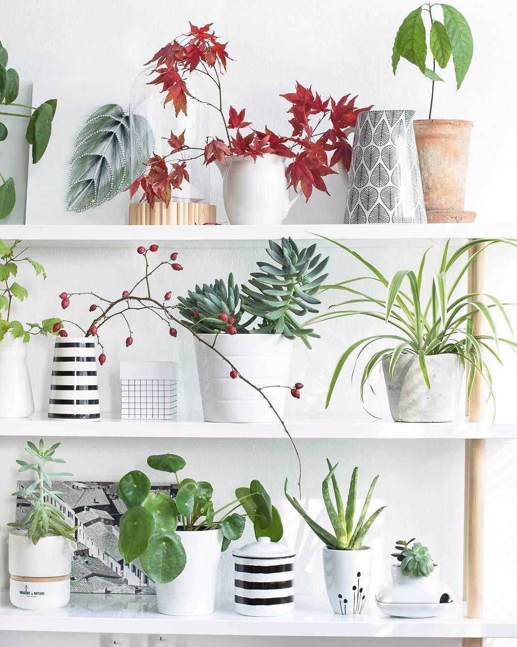 zimmerpflanzen versch nern wohnr ume und sorgen f r ein ausgeglichenes raumklima doch welche. Black Bedroom Furniture Sets. Home Design Ideas