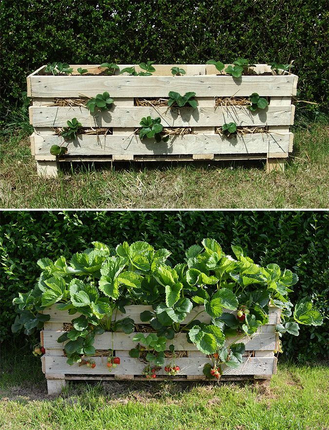 How To Make A Better Strawberry Pallet Planter Klubnichnyj Sad