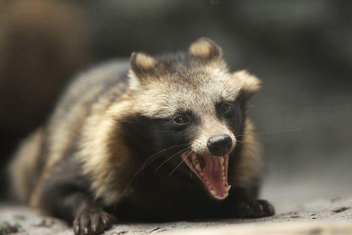 動物園始めました の画像 エキサイトブログ Blog 動物 タヌキ 動物園