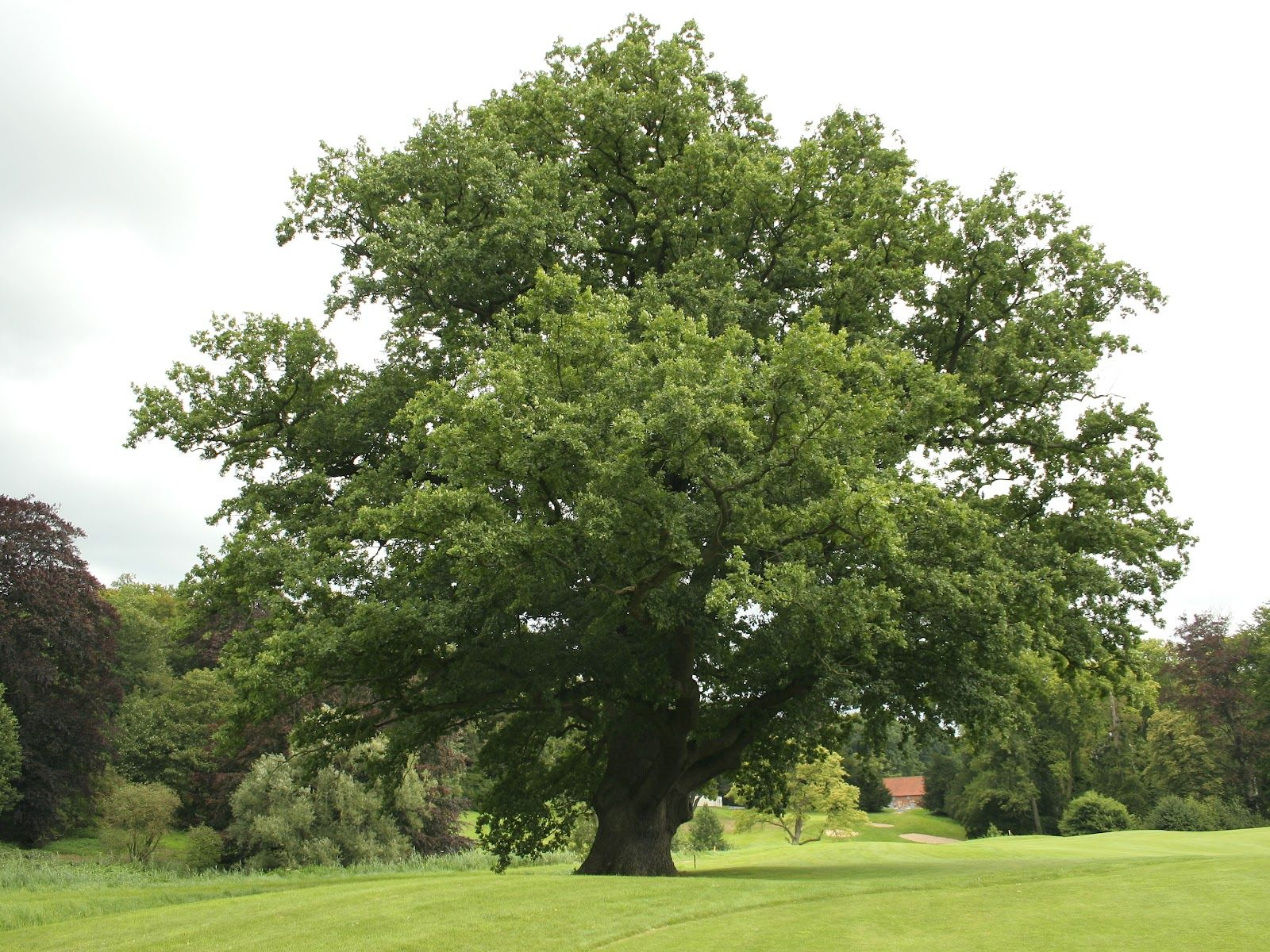 Pin Von Gabi Auf Gabi S Schnell Wachsende Baume Baum