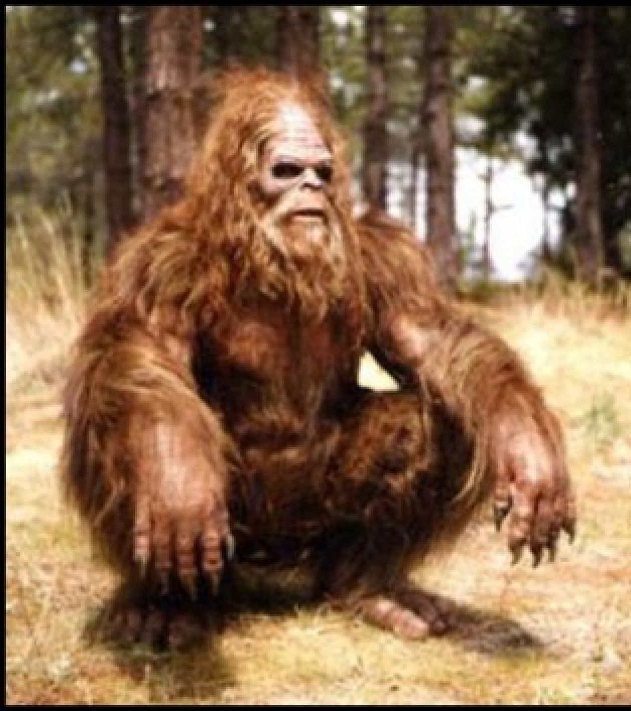 1533e224c692 cropped Sitting down sasquatchjpg Science and her Pseudos Pinterest