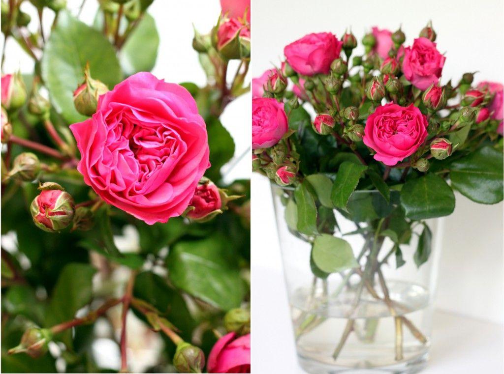 Freilandrosen  ein Genusstraining  Rosen  Rosen Schnittblumen und Blumen