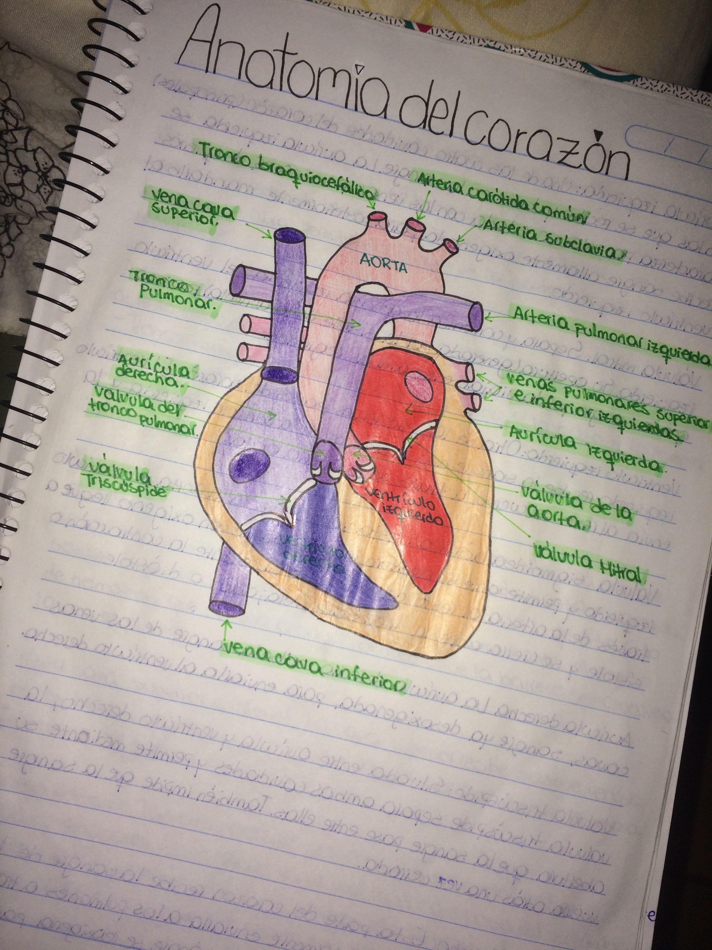 medicina #anatomía #apuntes #biología | Biología | Pinterest ...